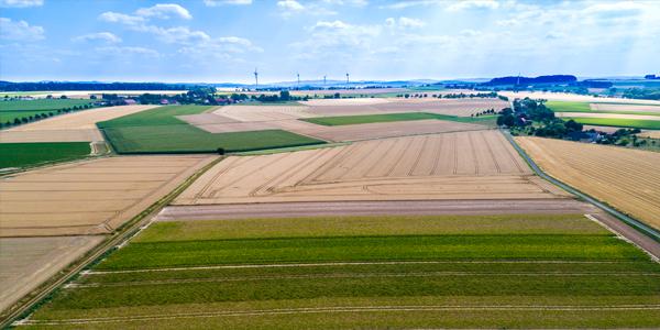 Сельское хозяйство и пищевая промышленность